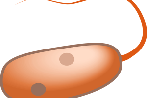 Are Humans Prokaryotes