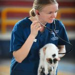 How Do Veterinarians Contribute To Society