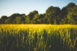 Why Investing In Vacant Land Can Make You Money