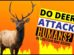 Do Deer Attack Humans