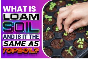 What is Loam Soil and is it the Same as Topsoil.